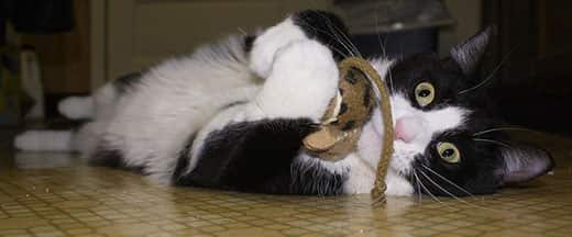 Black and cat laying on its side plays with a toy mouse with surpised look on face.