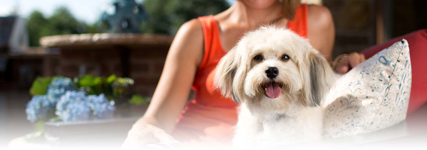 Prescription Dog Food >> Shih Tzu Dog Breed - Facts and Personality Traits   Hill's Pet