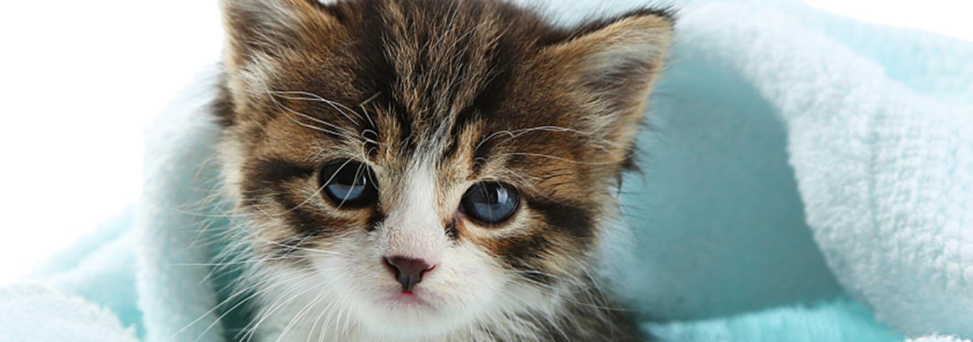 How Kitten Food And Adult Cat Food Differ