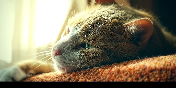 How To Soothe Your Cat S Upset Stomach Hill S Pet