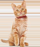 Cat Food Hill S Pet